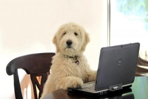 Online Shopping for Pets